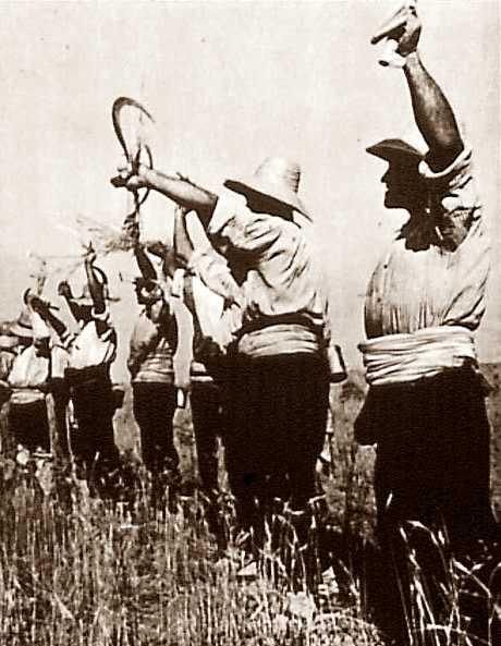 Pagesos revolucionaris